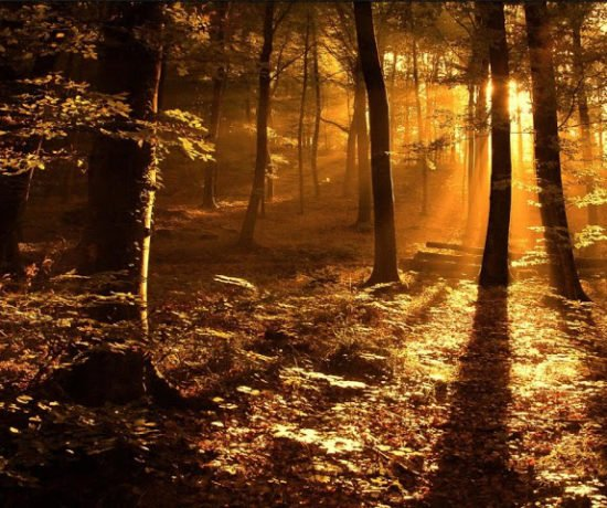 Autumn_Forest_in_the_Sun-3